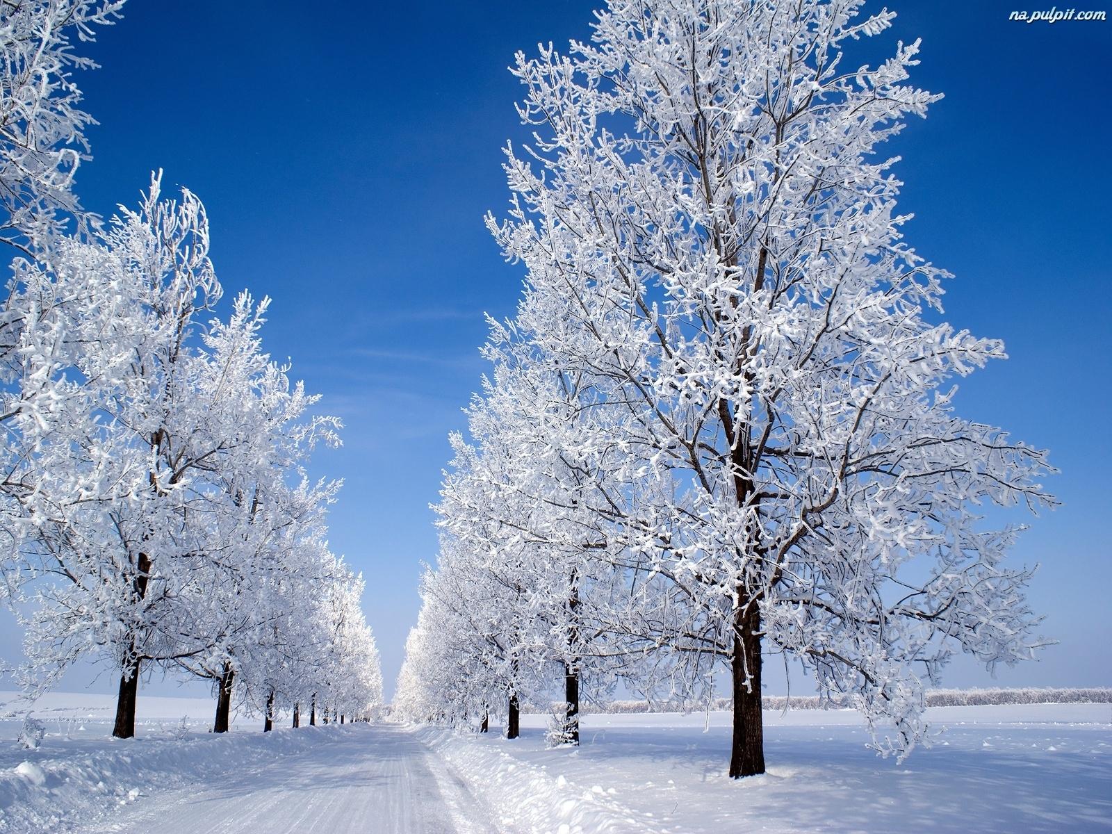 Znalezione obrazy dla zapytania drzewa zimą